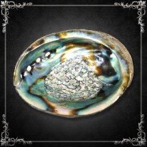 Abalone - coquille naturelle grand format